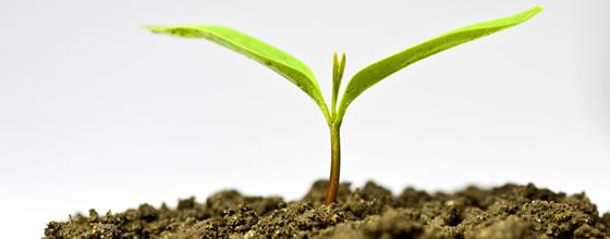 Concilier Agriculture et photovoltaïque : ECO Solution Energie