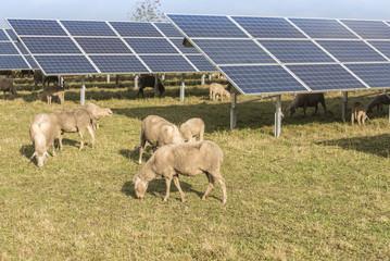 Agrivoltaïsme élevage
